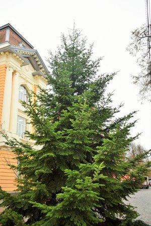 На Закарпатті встановили першу новорічну ялинку (фото)