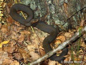 У сусідній із Закарпаттям області посеред зими чоловіка вкусила змія