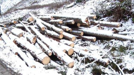 Лісівники Рахівщини досі розчищають ліс від завалів, які наробив буревій у 2017 році (відео)