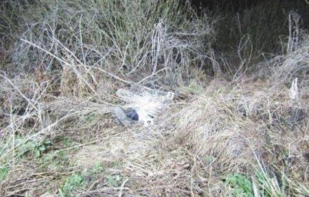 Бив головою об стовп: у лiсi через 100 гривень товариші вбили чоловiка