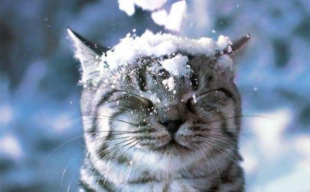 Завтра всі закарпатці цієї зими побачать справжній сніг