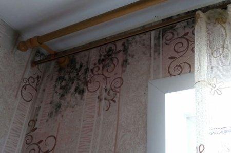 У п'ятиповерхівці в Мукачеві через дірявий дах два поверхи заростають цвіллю