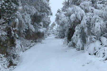 Сніг, дощ, хуртовини та нахабна ожеледиця: Прогноз погоди на 12 грудня