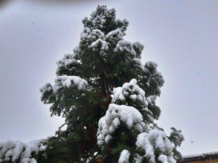 На Закарпатті випаде майже півметра снігу