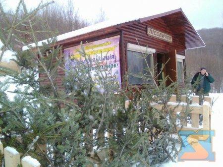На Закарпатті можна знайти легальні ялинки, які можна купити (фото)