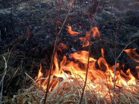 На Закарпатті вже вдруге горіла суха трава на території Долини нарцисів