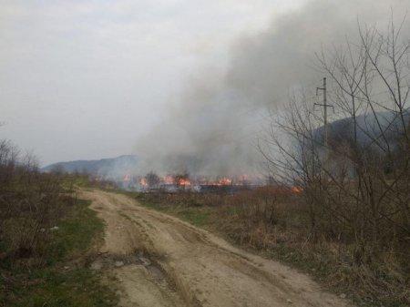 Біля Ужгорода горять поля (фото, відео)