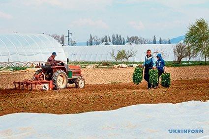 «Зараз краще вижити, а не заробити»: на що сподіваються фермери в «тепличних» селах Закарпаття в умовах карантину (ФОТО)