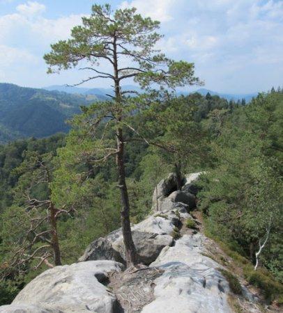 У Карпатах жінка зірвалася зі скелі, намагаючись підкорити вершину гір