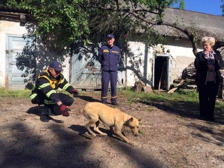 Закарпатські рятувальники врятували собаку, яка застрягла на горищі