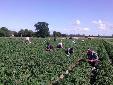 Чеську робочу візу можуть отримати тільки сезонні робітники для збору городини