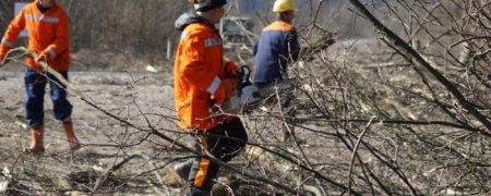 До уваги закарпатців: від Перечинського району до шляхопроводу біля села Кам'яниця проводитимуть роботи по видаленню аварійно-небезпечних дерев