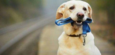 За неправильний вигул домашніх тварин на мукачівців чекає штраф