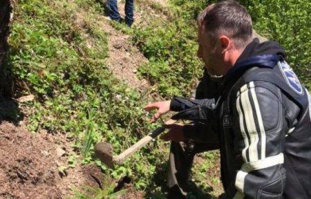 Байкери із усієї України зібралися задля відновлення карпатських лісів