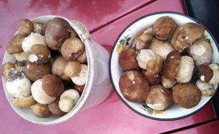 Грибний сезон продовжається:  грибарі вихваляються у мережі своїм уловом (Фотофакт)