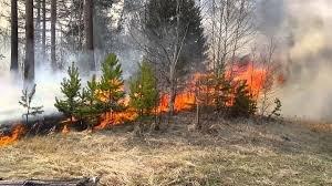 На Перечинщині прокурором погоджено підозру молодику, через хуліганські дії якого вигоріло близько пів гектара лісу