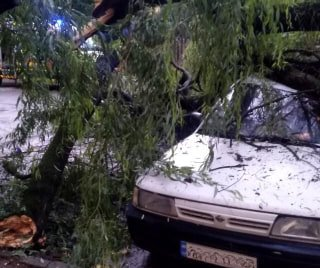 Закарпатська область: рятувальники ліквідовували наслідки падіння дерев
