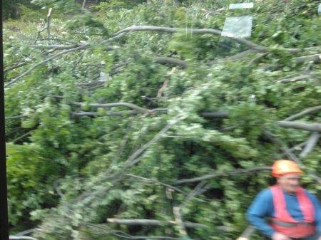 На Ужгородщині перекривають автотрасу – валять ліс (фото)