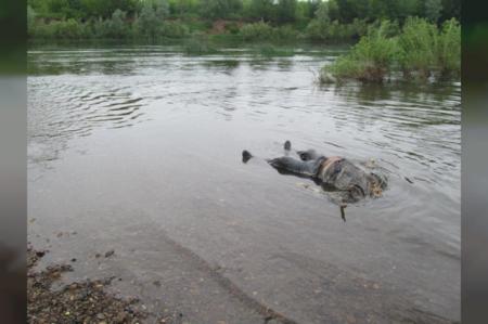 Через дощі Тиса піднялася і принесла жахливу знахідку для рибалок (фото)