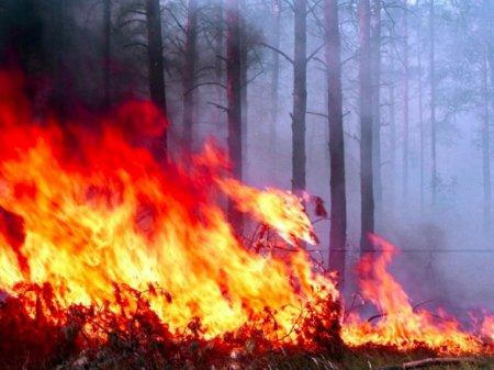 Прокуратура взялася за молодика, через якого вигоріло пів гектара лісу