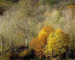 Тепліше, ніж зазвичай: якими будуть осінь і зима в Україні