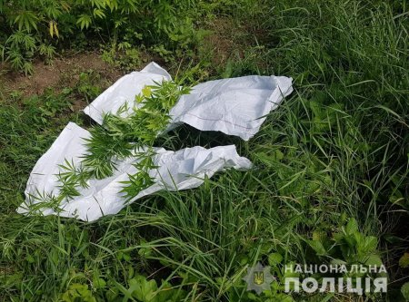 На Берегівщині поліція вилучила у чоловіка плантацію нарковмісних рослин