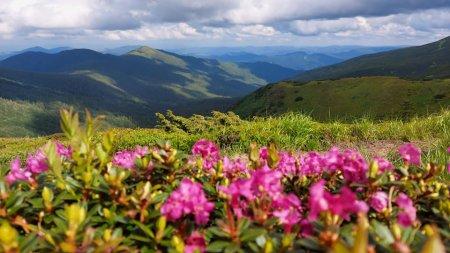 На Піп Івані снігуронька посеред літа милується квітами Червоної рути