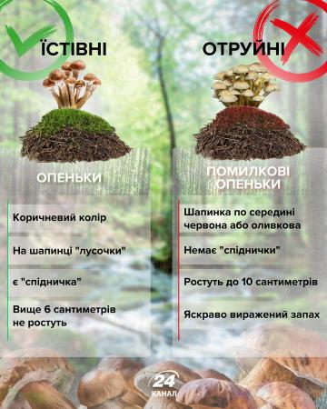 Як відрізнити отруйний гриб від їстівного – інфографіка