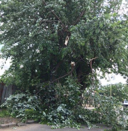Через пориви вітру в Ужгороді дерево впало на дорогу (фото)