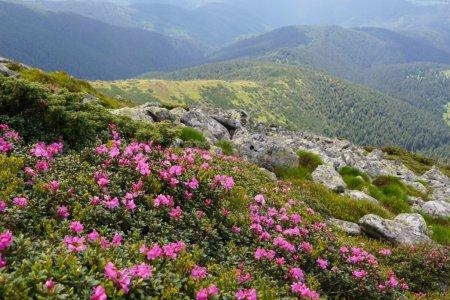 Чому варто відвідати гори Закарпаття влітку?