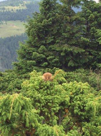 На Рахівщині помітили незвичну тваринку (фото)