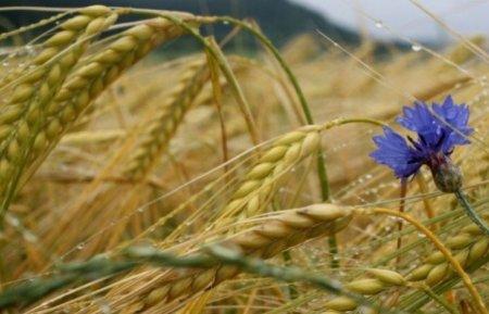 Прикмети 1 серпня: Як правильно провести день цнотливої Макриди-Мокрини