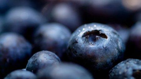 Лохина та чорниця: Користь і калорійність ягід
