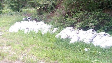 На Рахівщині власники курортів на Драгобраті викидають сміття просто в ліс