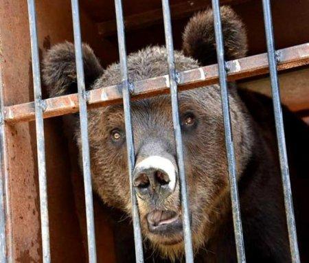 Два ведмедики будуть відновлювати своє здоров'я на Міжгірщині