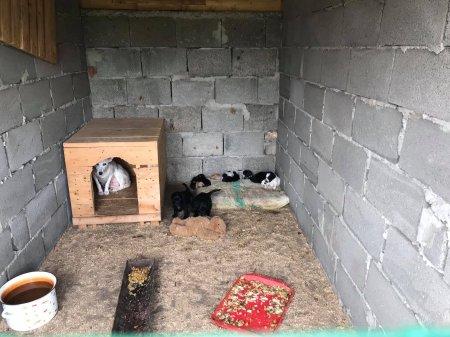 """На території КП """"Еко-Берегово"""" утримують безпритульних собак (фото)"""