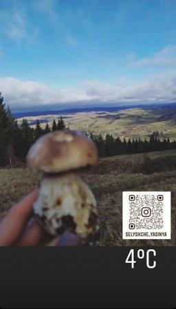 На Рахівщині триває грибний сезон (Фото)