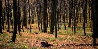 На Рахівщині у лісі знайшли мертвого чоловіка